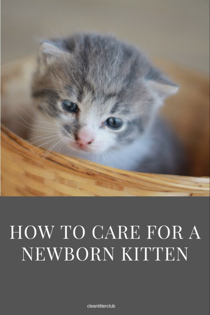 How To Care For A Newborn Kitten With Images Newborn Kittens Kittens Cat Care