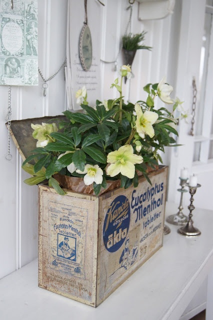 flowers in old tin box ~~ Country Life in Norregård