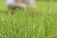 Liquid Grass Fertilizers