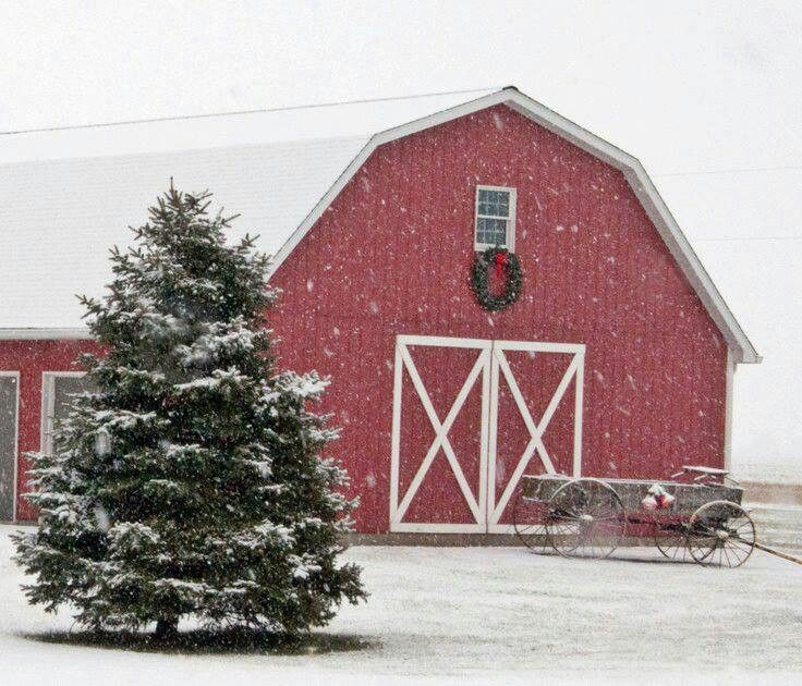 Snowing in the barn lot.  Charming and Christmas Card worthy.