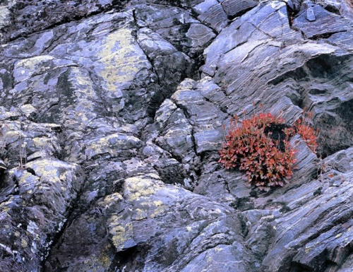 40 best landscape photography images on pinterest landscape bracted alumroot granite and lichens the last day last photograph of my residency at rocky mountain national park sciox Image collections