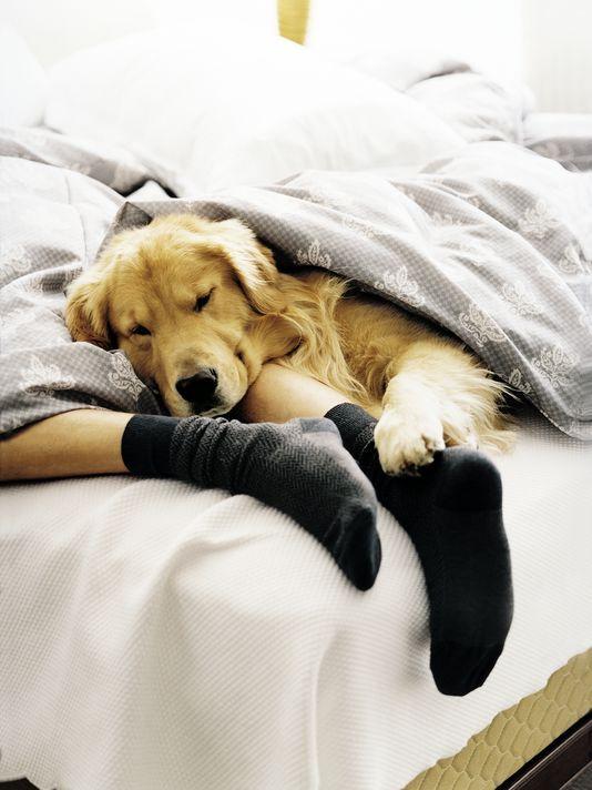 33 best fido friendly images on pinterest dog cat pets and little dogs. Black Bedroom Furniture Sets. Home Design Ideas