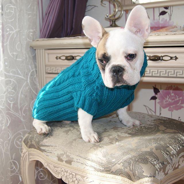 Предлагаем мягкие шерстяные свитера для собак, которые хорошо согревают, удобно одеваются, стильно смотрятся. Вступайте в группу-заказывайте - vk.com/windlordcoats #французский_будьдог #люблюсобак #люблюсобаку #frenchbulldog #frenchie #frenchiesofinstagram #frenchielove #frenchbully #frenchbullys #bulldog #бульдог #бульдожка #бульдоги #bulldogs #французик #frogdog #frogdogs#knitting#свитердлясобаки#одеждадлясобак #dogswear красиваясобака#красиваясобачка#любимаясобакамоя