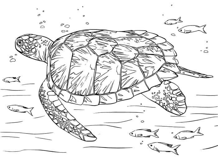 19+ Coloring page of a sea turtle info