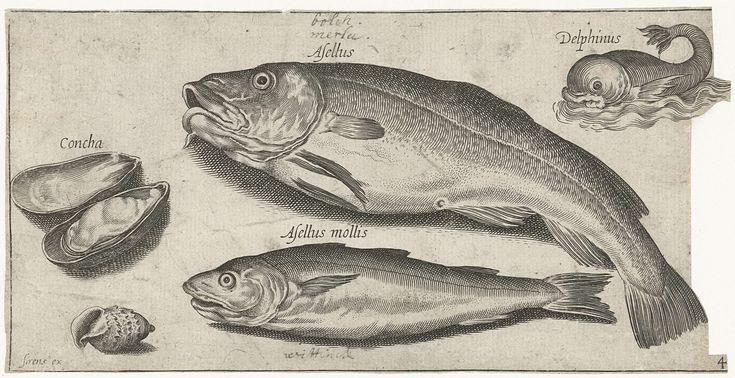 Pierre Firens | Kabeljauw, wijting, een dolfijn en schelpen, Pierre Firens, Adriaen Collaert, 1600 - 1638 |
