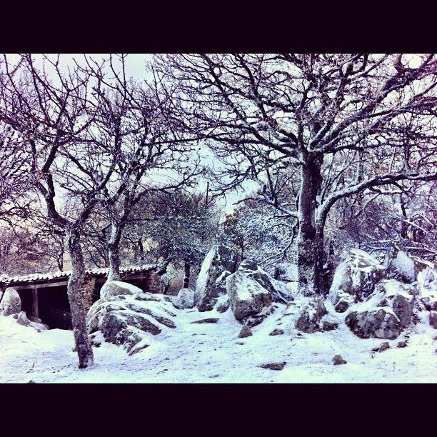 """neve al Parco Faunistico """"Donnortei""""    Fonni - Sardegna -Italia"""