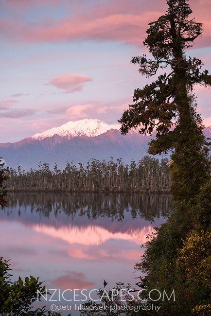 Sunset at Lake Wahapo near Whataroa with kahikatea grove and Mt. Adams in background, Westland National Park, West Coast, New Zealand