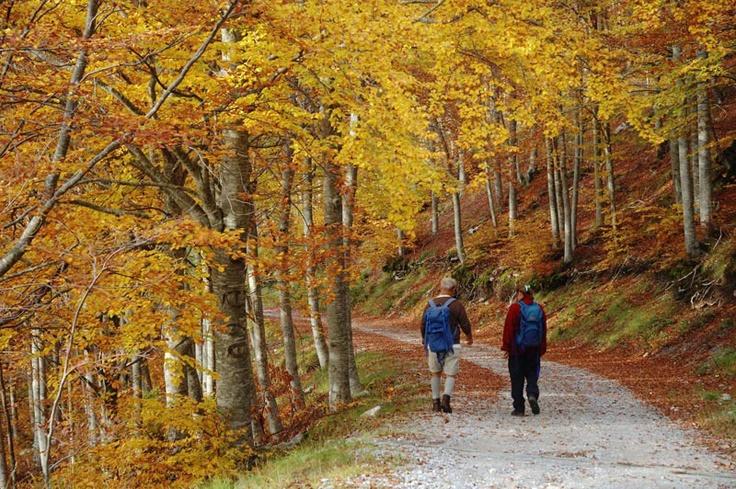 In autunno, per godere il colore del bosco