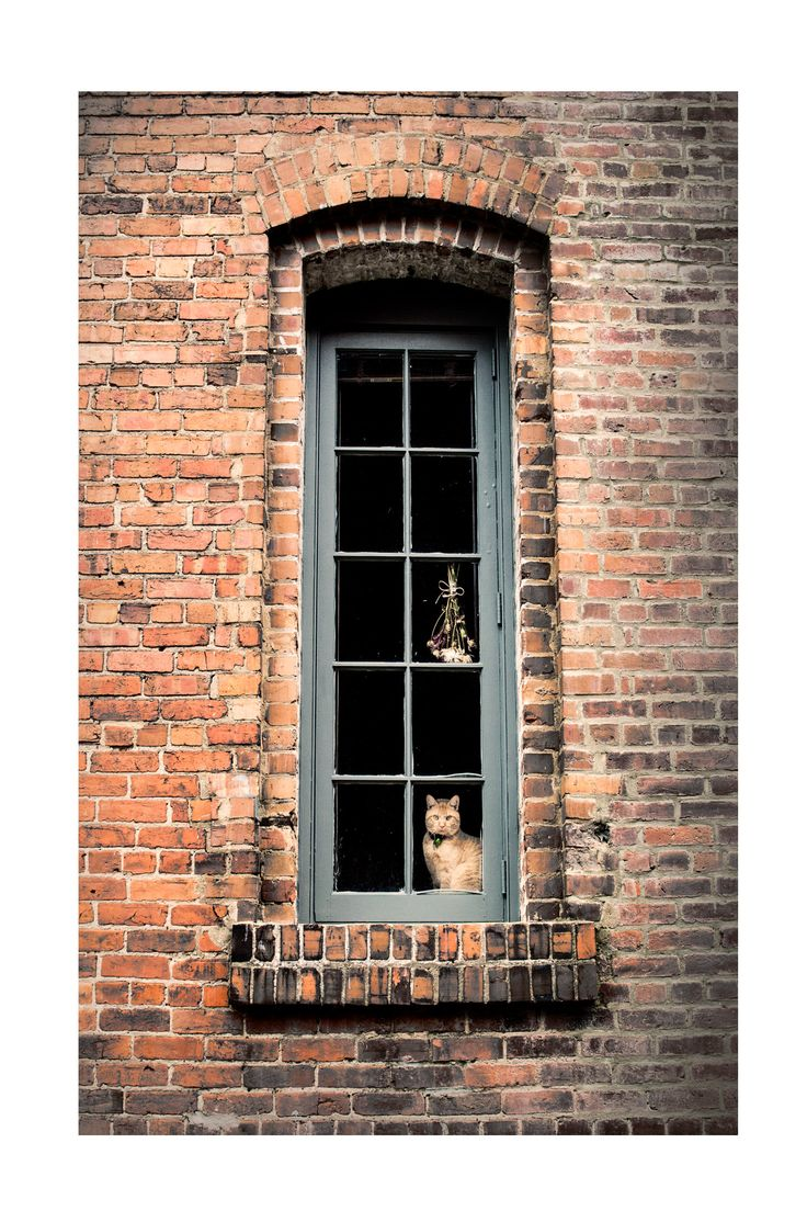 "Fine Art Photography ""The Observer"", Durham NC, Brick"