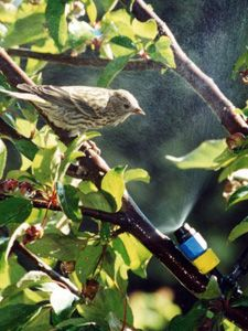 Like children running through a sprinkler, birds like to beat the heat by passing through water misters. They help birds keep their feathers in top condition by providing a water source for washing and preening. Our Mini-Mister™ attaches easily to any garden hose to produce a fine water spray. Place it near vines or bushes so birds, such as hummingbirds, can flutter against the wet leaves for a refreshing bath or a much needed drink.