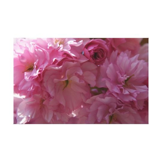 Spring Canvas Print by www.zazzle.com/htgraphicdesigner* #zazzle #gift #giftidea #pink #spring #blossoms #canvas #print