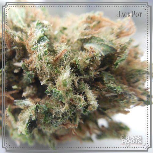Jackpot. California Medical Cannabis.