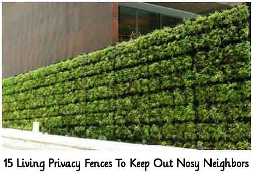 15 Living Privacy Fences To Keep Out Nosy Neighbors - Lil Moo Creations
