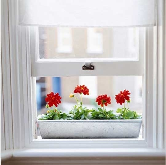 Indoor window boxes.  maybe instead plant succulents so I wouldnt kill my poor plants