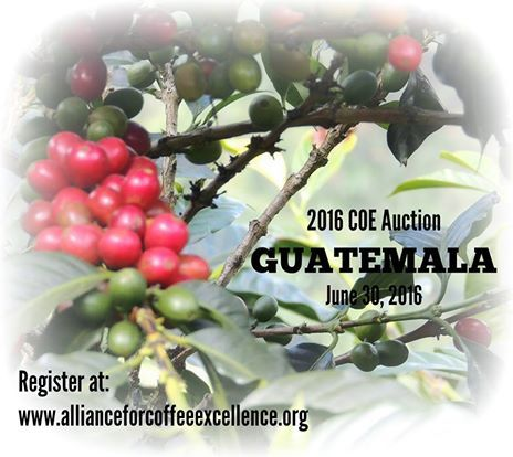 We are days away from the 2016 COE Guatemala auction. Don't miss your chance to bid on these award winning coffees. https://www.allianceforcoffeeexcellence.org/en/