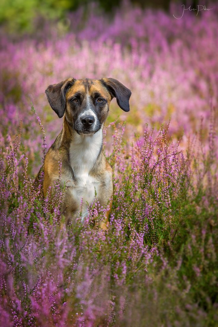 Photograph Butch by Julia Poker on 500px