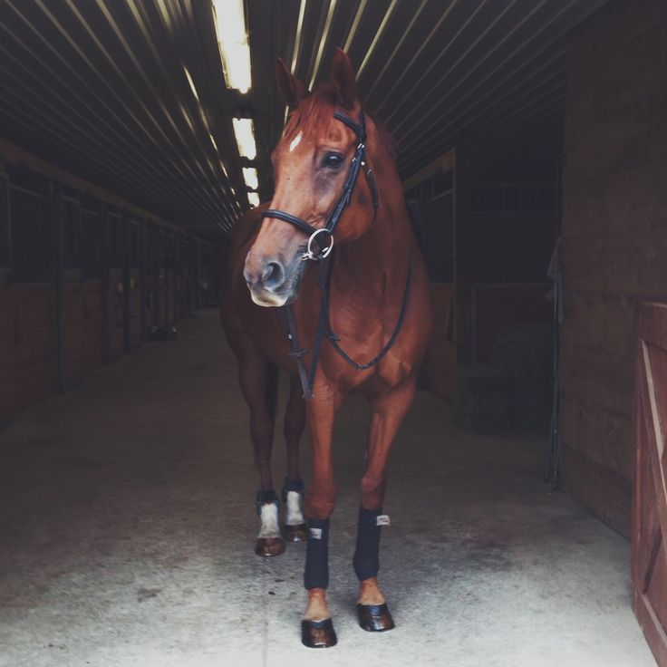 Hoof prints in my Heart | allthehorsesandme: omg Fil