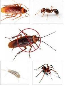 Come eliminare gli scarafaggi in casa