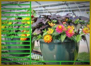 Kiat Bisnis Bunga Dan Tanaman Hias Menguntungkan