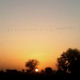 Birds fly over sunset http://travelleiz.com