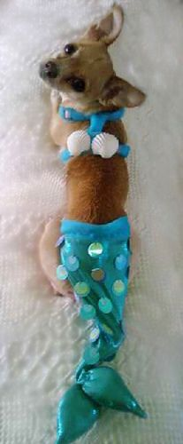 @Debbie Gotkowski Schueler CUTE!  I thought maybe some of your little dogs might look cute in this.  LOL!