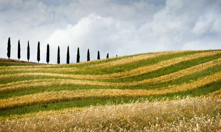 Tuscany lines by Mr. Lev on 500px