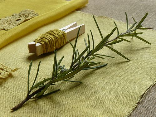 dyeing with rosemary, from Sonia