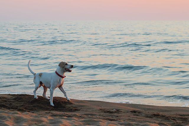 #Greece #Ilia #Giannitsokhori #dog #beach #Sea #Summer #nature #water #sand #dawn #magical #dreamy #amateur #art #photography #romantic #contrast #Canon #love #cute #instalike #instamoment #instamood #myview #photooftheday #amazing #tagforlikes #blue #playful