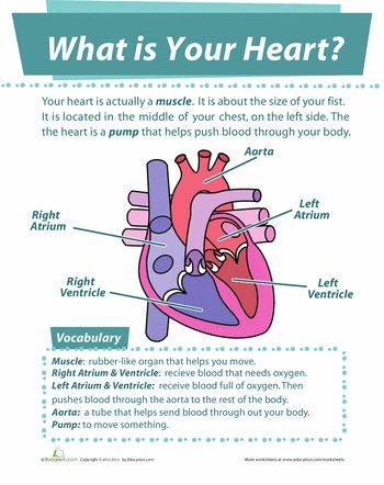 48 best human anatomy images on pinterest science worksheets life your heart ccuart Gallery