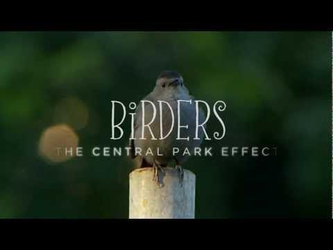 Birders: The Central Park Effect - Official Trailer - YouTube *for Chris Gavin