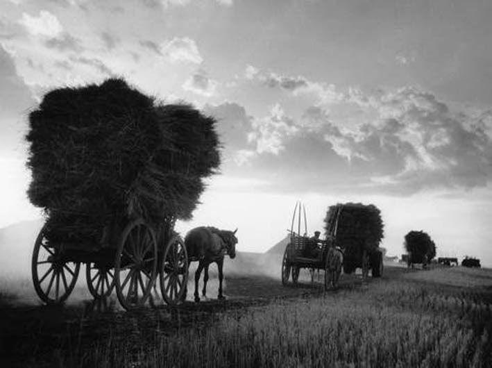 Τερψιθέα Λάρισας. Κουβάλος, μεταφορά σιτηρών (1948)