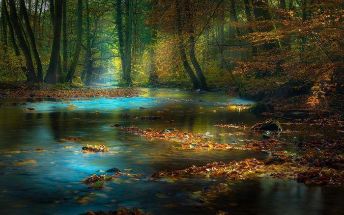 Осень на фото. Вальс золотой и багряный
