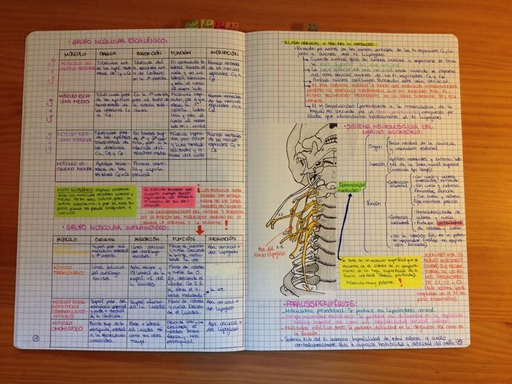 The unfortunate events of a med student : My anatomy revision notebook for neuromuscular...