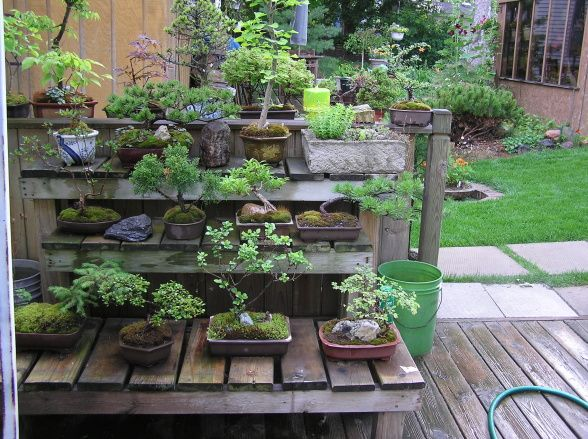 Bonsai Tiers For Outside Den. Small Japanese GardenJapanese Garden  DesignJapanese StyleJapanese GardensSmall SpacePatioMiniatureBonsaiDisplay