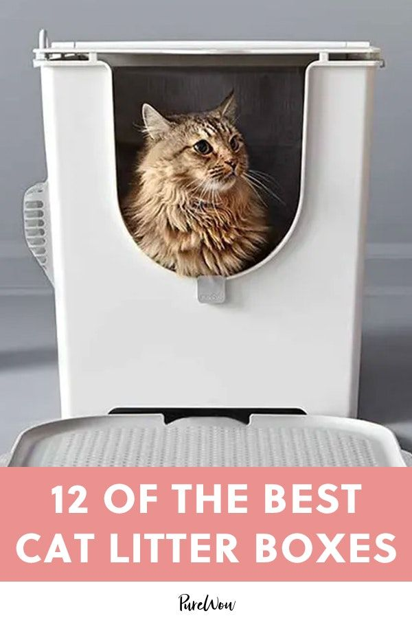 12 Of The Best Cat Litter Boxes Best Cat Litter Cat Litter Box Litter Box