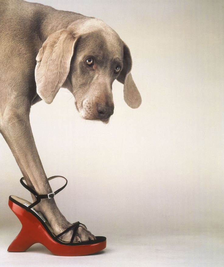 William Wegman, Walk-a-thon. Not sure whether to pin this on Weimaraner board or closet board!