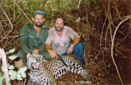 Hace 50 años la población total en América Latina superaba los 300 mil, hoy son menos de 30 mil. Se calcula que en unos 25 años ya no habrá jaguares en el mundo.