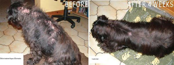 steroid dog hair loss