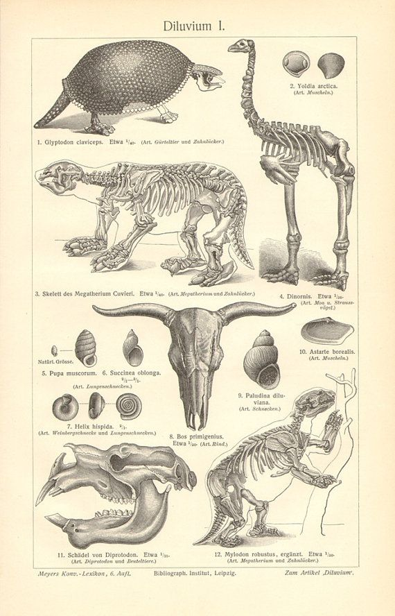 1903 pleistocene megafauna ground sloth by cabinetoftreasures