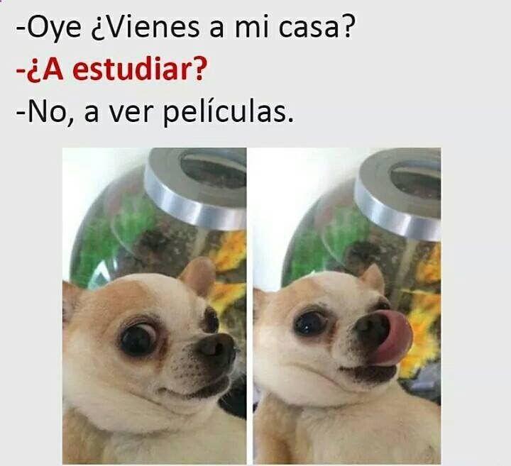 Imagenes de Humor #memes #chistes #chistesmalos #imagenesgraciosas #humor www.megamemeces.c... ➫➬➫ http://www.diverint.com/imagenes-divertidas-animadas-madres-haciendo-registros-policiales