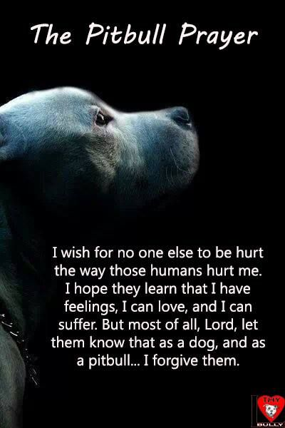 the pitbull prayer
