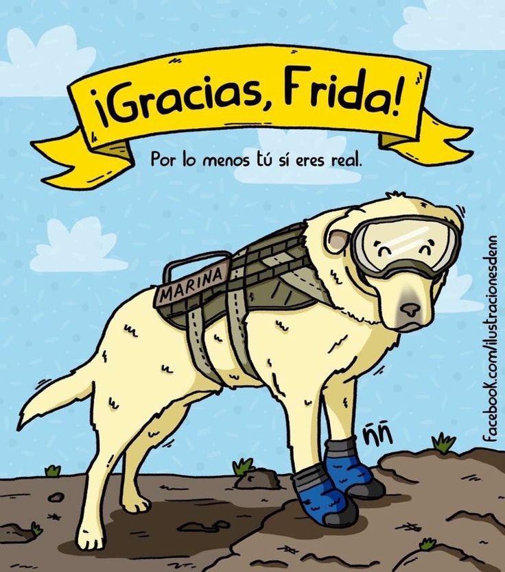 Frida la perrita rescatista. México 2017