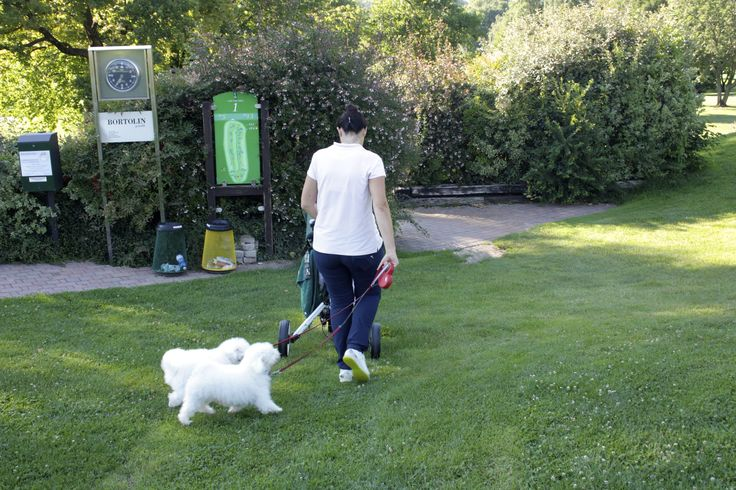 Dogs in Golf Club Udine.  A pet-friendly Golf course. Fagagna, Udine - Italy