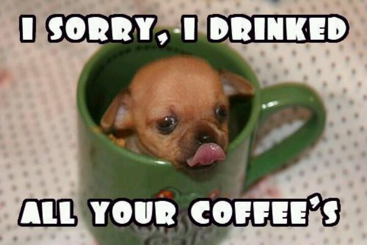 Funny Meme Sorry : I sorry drank all your coffee cute pets