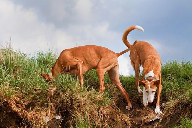 Na Psim Tropie Dlaczego Psy Zakopuja Rozne Rzeczy Dogs Old Women Animals