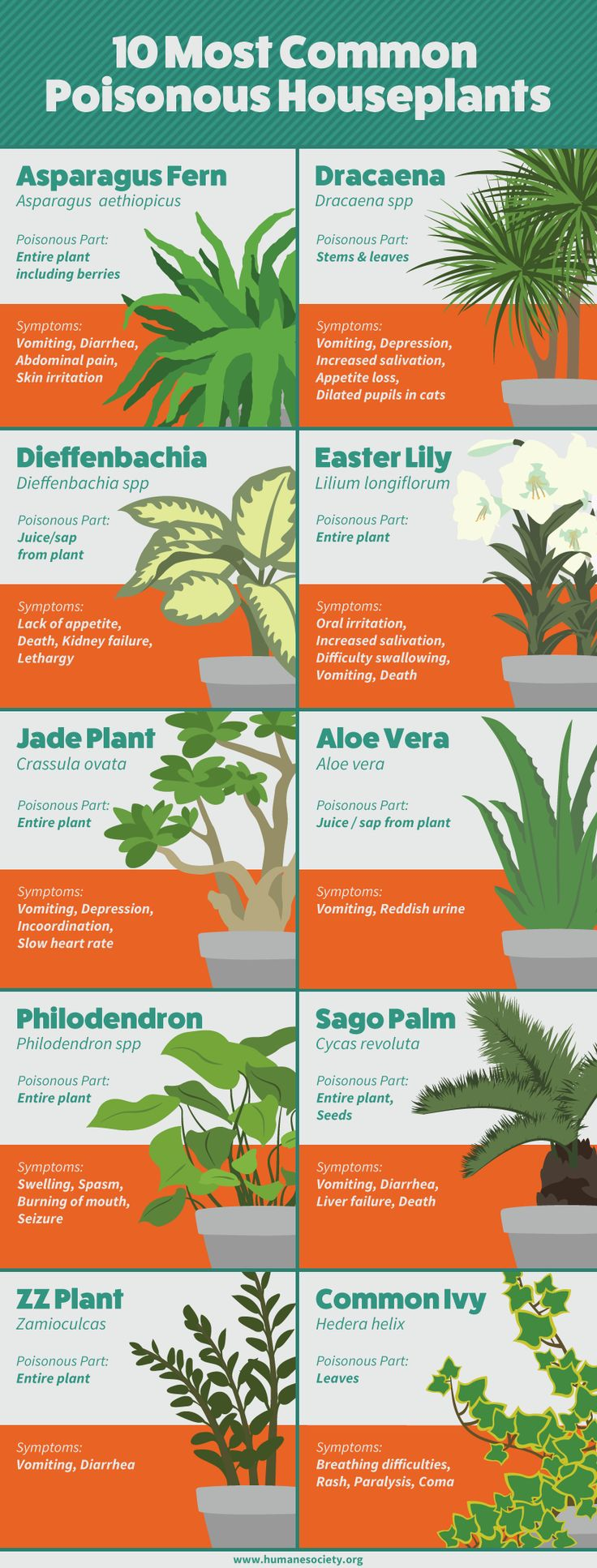 Ten Most Common Poisonous Houseplants