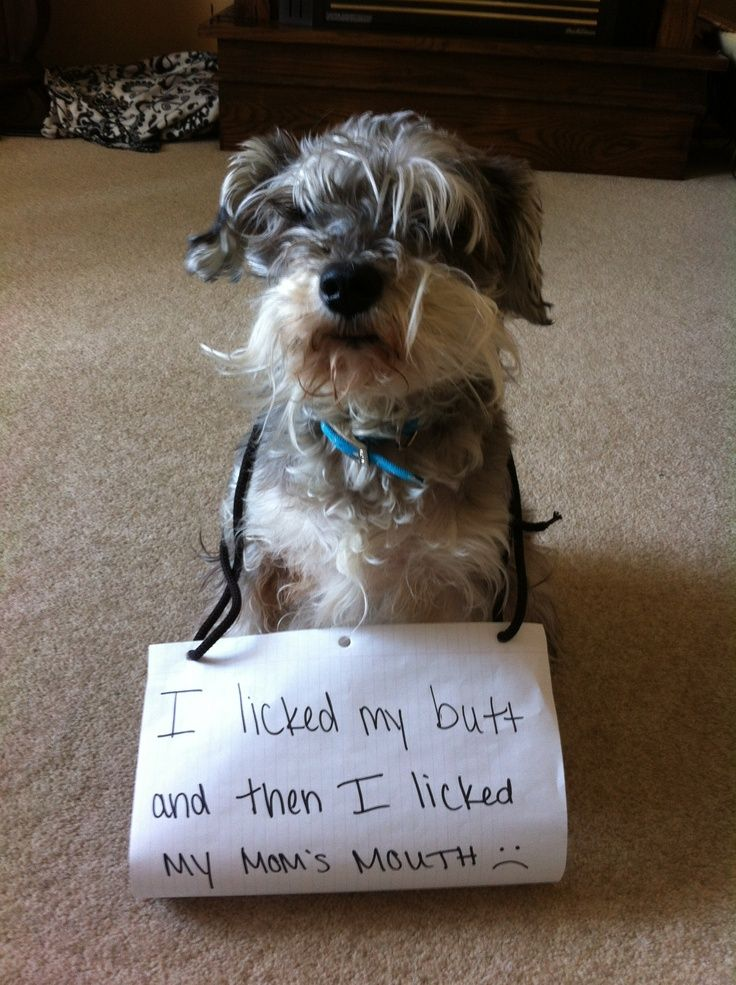 dog shaming | Dog shame. | Funny Things