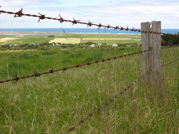 Barbed Wire Fence On Farm