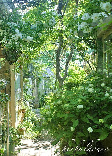 Lovely side yard garden ᘡℓvᘠ □☆□ ❉ღ happily // ✧彡●⊱❊⊰✦❁❀‿ ❀ ·✳︎· FR APR 14 2017 ✨ ✤ॐ ✧⚜✧ ❦♥⭐ ♢∘❃ ♦♡❊ нανє α ηι¢є ∂αу ❊ღ༺✿༻✨♥♫ ~*~ ♆❤ ☾♪♕✫❁✦⊱❊⊰●彡✦❁↠ ஜℓvஜ .