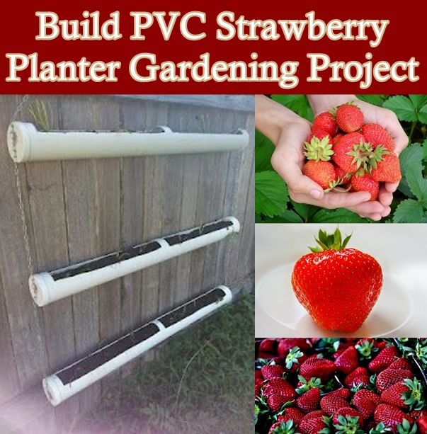 Build PVC Strawberry Planter Gardening Project Homesteading  - The Homestead Survival .Com
